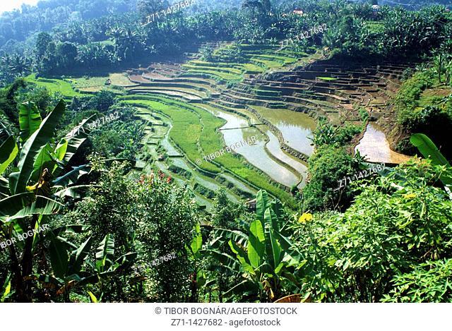 Indonesia, Sumatra, Tabat Patah, rice fields