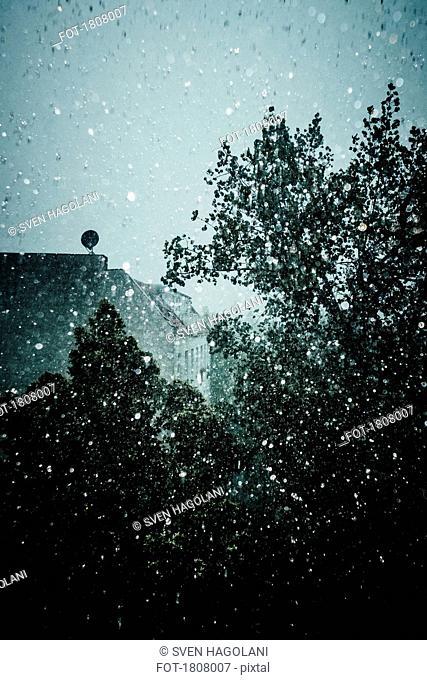 Ethereal raindrops on window overlooking tree