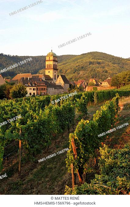 France, Haut Rhin, Alsace Wine Route, Kaysersberg, the vineyard and the Sainte Croix church