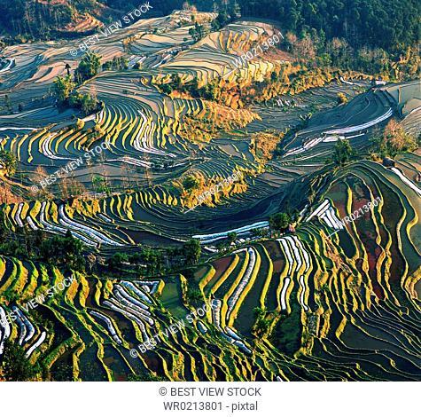Yuanyang,Yunnan