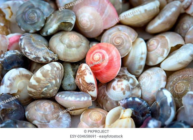 Sea shells collected on the coast of Thailand as background, Focus red clam