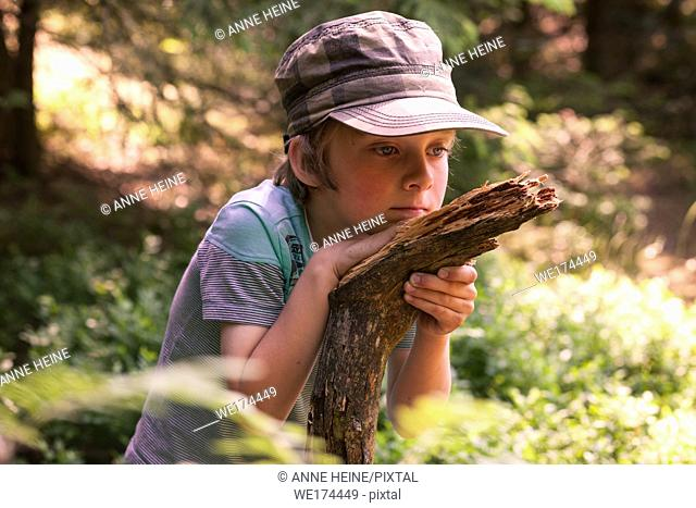 Young boy looking at wood decaying in forest. Warstein, Arnsberger Wald, Sauerland, Germany