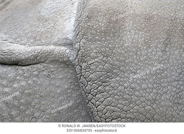 detail of the skin of an Indian rhinoceros in a zoo, Netherlands