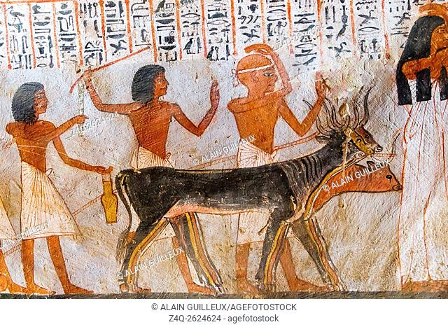 UNESCO World Heritage, Thebes in Egypt, Valley of the Nobles (Dra Abu el Naga), tomb of Roy. Oxen pulling their load