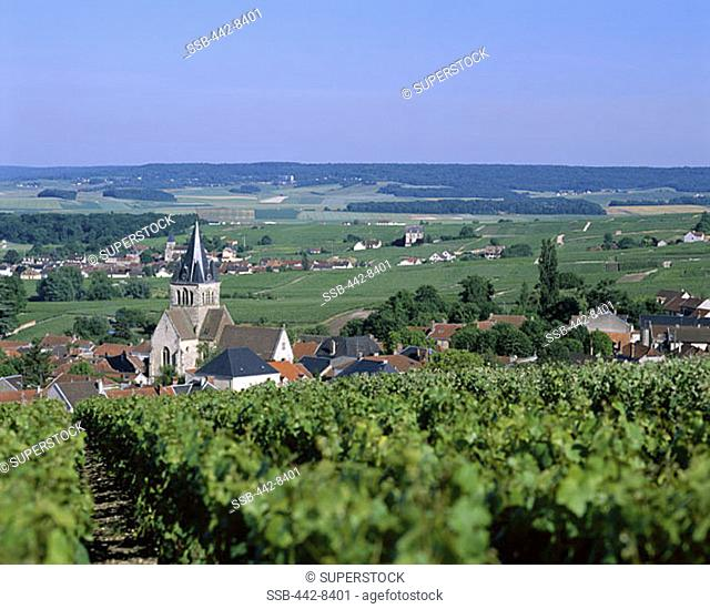 Vineyards near Reims, Champagne, France
