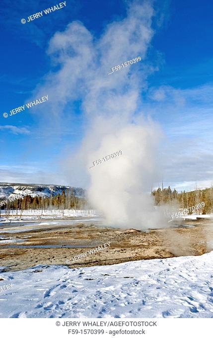 Spouter Geyser, Black Sand Basin, Winter, Yellowstone NP, WY