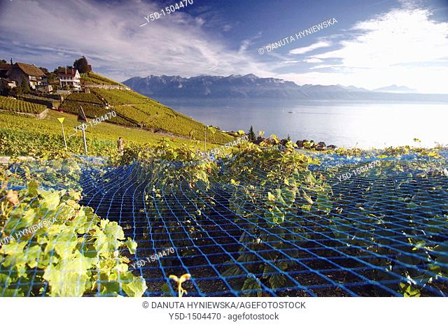 Lavaux vineyards, UNESCO Heritage, Geneva Lake, Alps, Switzerland