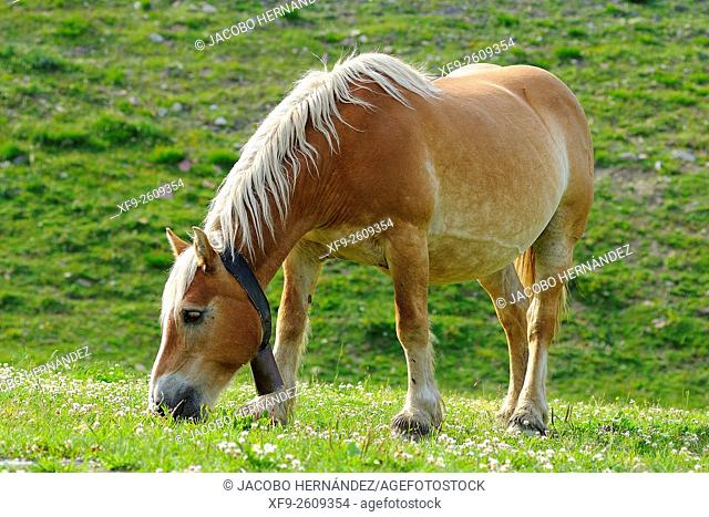 Horse.Pirineos mountains.Huesca province.Aragon.Spain