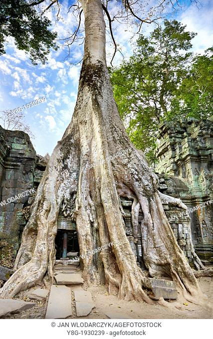 Angkor - roots of a giant tree overgrowing ruins of the Ta Prohm Temple, Angkor Temple Complex, Cambodia, Asia, UNESCO