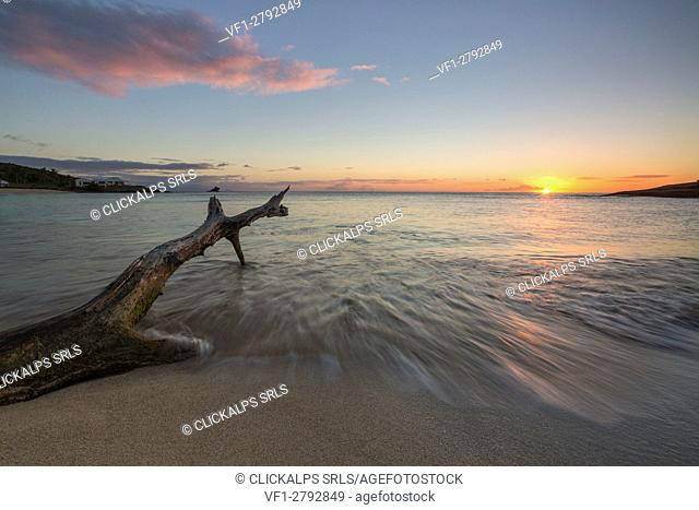 Waves on a tree trunk on the beach framed by the caribbean sunset Hawksbill Bay Antigua and Barbuda Leeward Islands West Indies
