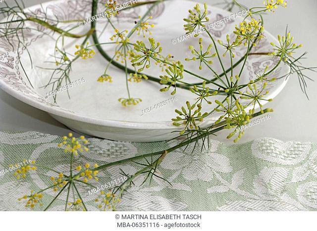 Still life with garden fennel