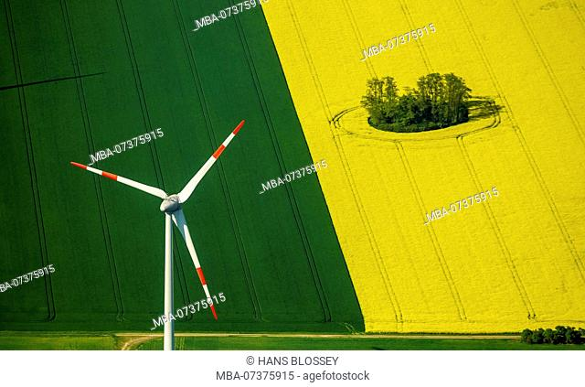 Meadows, flowering rapeseed fields and wind turbines near Perleberg, Perleberg, Brandenburg, Germany