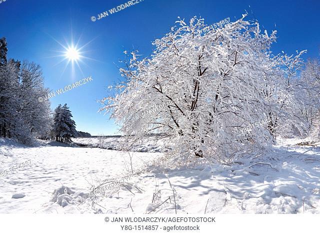 Winter landscape, Mazowsze region, Poland, Europe