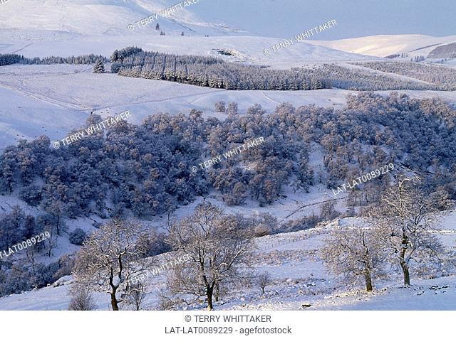 Snow. View of white fields. Bare trees. Stand of pines. Sunlight