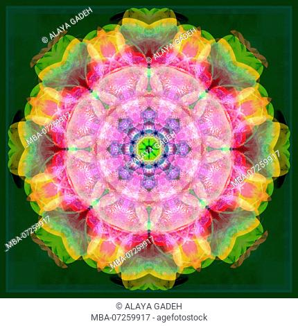 Photographic flower mandala, pink, rose-tinted, yellow, green