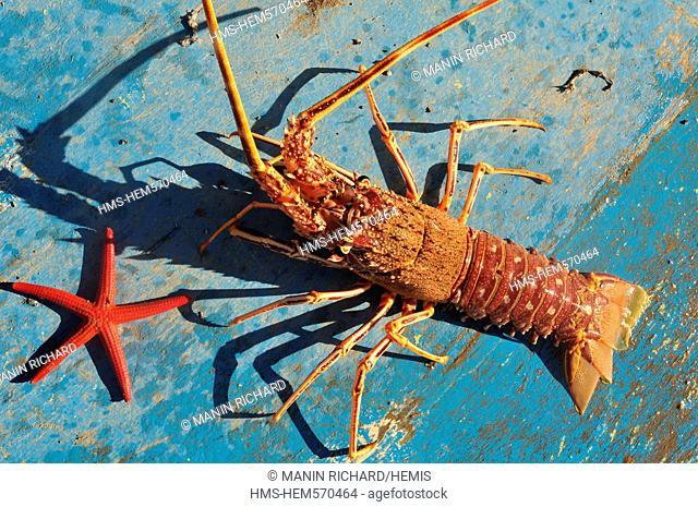 France, Haute Corse, Cap Corse, starfish and lobster