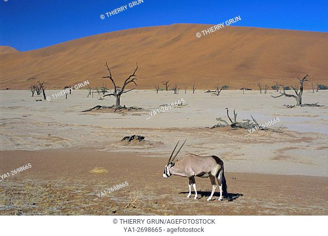 Namibia, Namib-Naukluft National park, Sossusvlei, Dead vlei and gemsbok (oryx gazella)