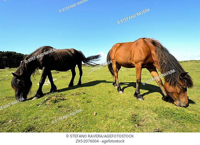 Two Galician ponies - Galicia, Spain