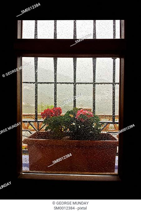 Barred Window with Geraniums,
