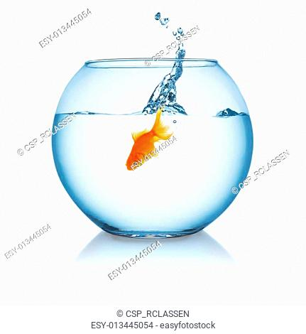 goldfish jumping in a fishbowl