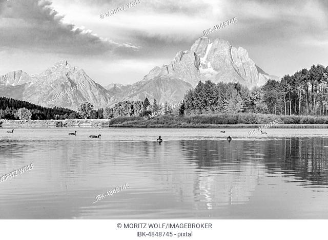 Black and white, Mount Moran reflected in Snake River, morning atmosphere at Oxbow Bend, Autumn trees and Grand Teton Range, Grand Teton National Park, Wyoming