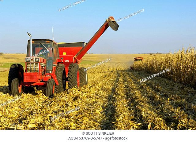 Agriculture - A tractor with a full grain cart pulls away from a combine harvesting the grain corn crop in Autumn / IA