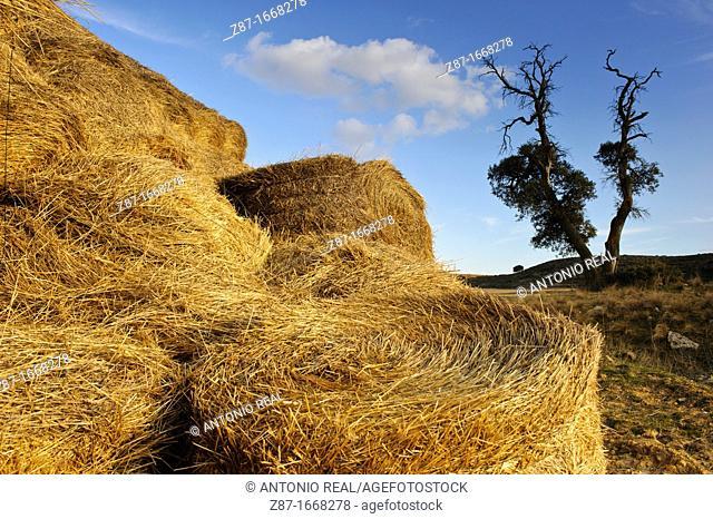 Straw bales, Almansa, Albacete province, Castilla-La Mancha, Spain