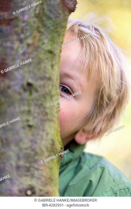 Boy behind tree, playing hide and seek, 3 years, Saxony, Germany