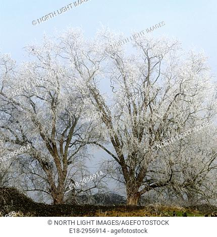 Canada, BC, Delta. Winter frost covered trees beside road in rural setting