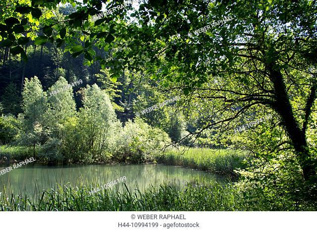 Switzerland, Europe, Baselland, Anwil, nature reserve, Anwil pond, pond