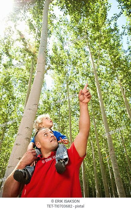 USA, Oregon, Boardman, Father showing son 8-9 poplar trees in tree farm