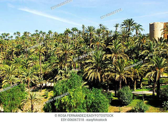 Garden of El Palmeral, an old plantation of palm trees made by the arabs, Elche, province of Alicante, Comunidad Valenciana, Spain