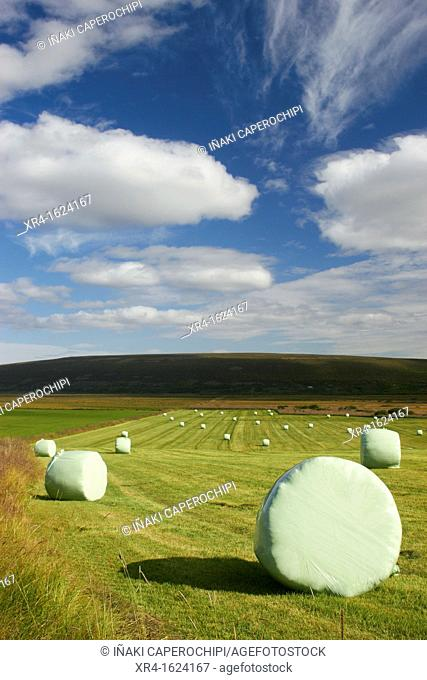 Straw bales in the Valley of Bardardalur, Iceland