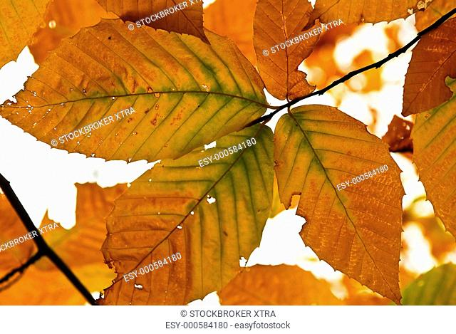 Autumn leaves of bright fall colours close up