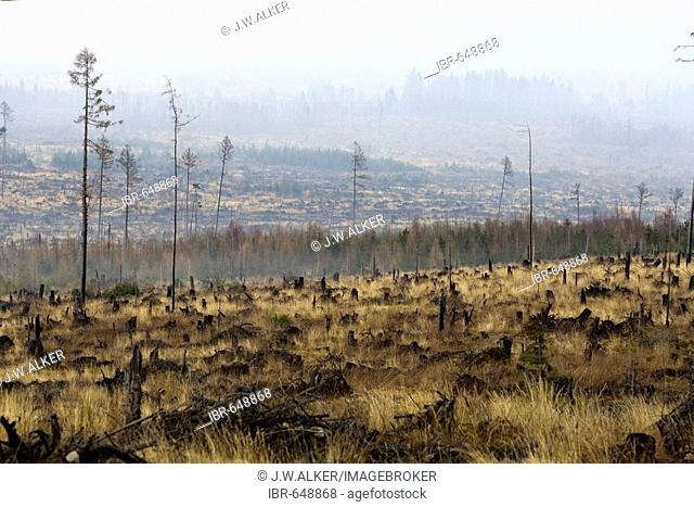 Environmental damage caused by storms and forest fires in 2005, High Tatras, Slovakia, Europe