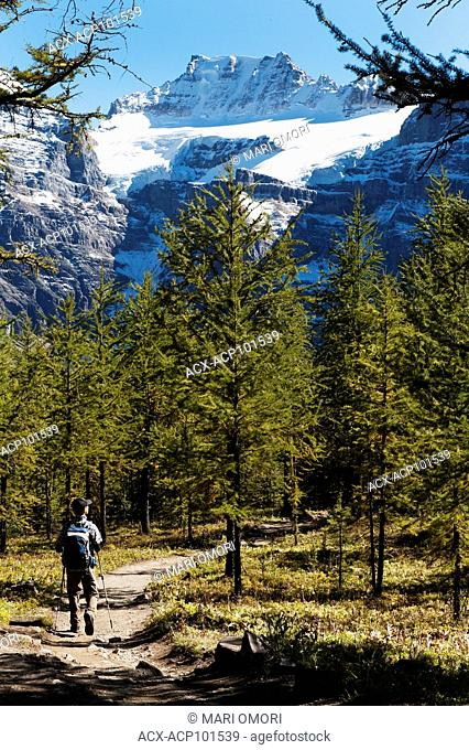 A hiker walks through Larch Valley, in Banff National Park. Model Release signed