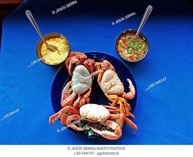 Brazilian crab. São Luis. Brazil