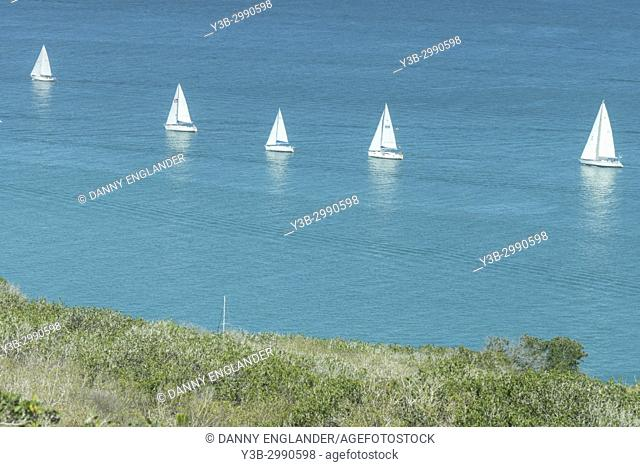 A line of white sail boats on turquoise water off Cabrillo National Monument in San Diego, California