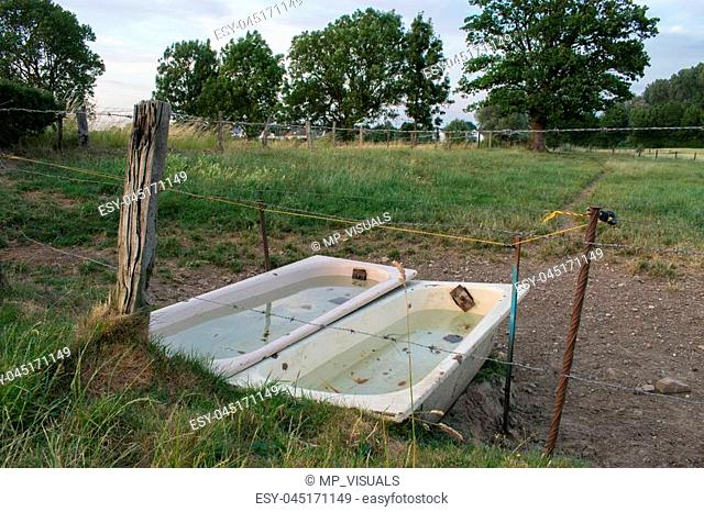 Two Bathtubes Filled Water Through Pasture Summer Cow Cattle Forest Woods
