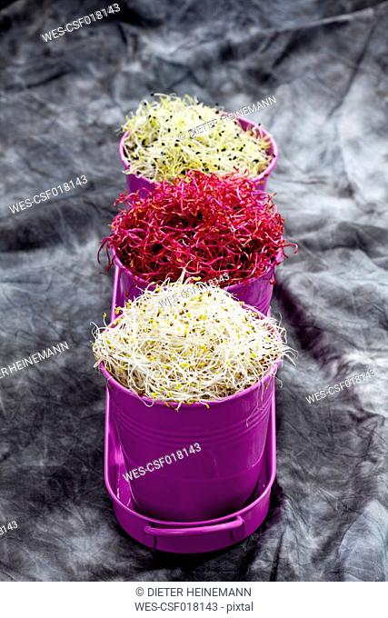 Mixed sprouts in container on tray, close up