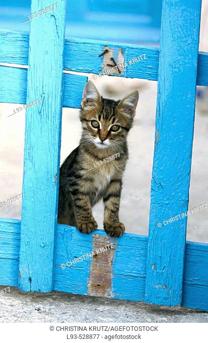 Cat (Felis catus). Greece