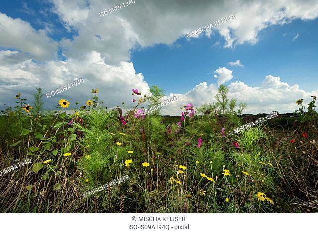 Wildflowers growing at the edge of rural field