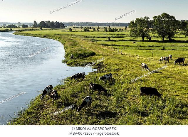 Europe, Poland, Podlaskie Voivodeship, Narew river - Strekowa Gora
