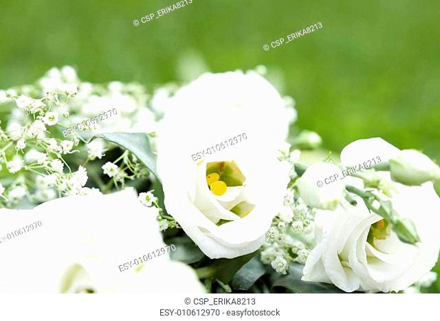 Close up on beautiful white roses