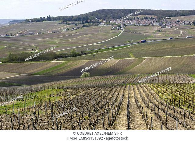 France, Marne, Hautvillers, winter wineyards close to Epernay with the village Hautvillers at the background