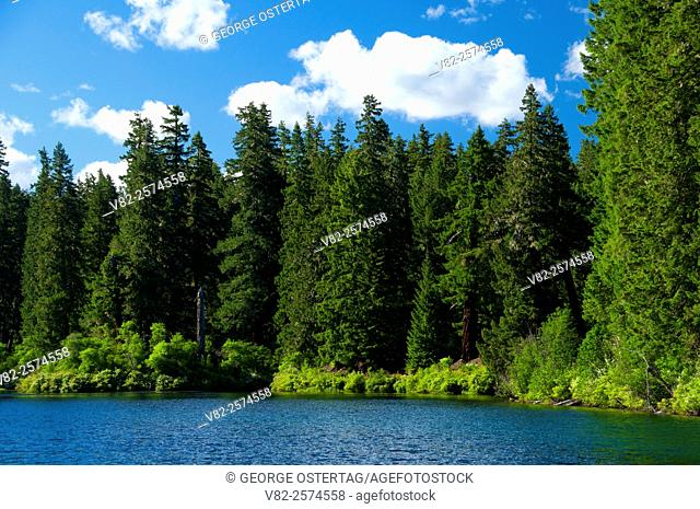 Clear Lake, McKenzie Pass-Santiam Pass National Scenic Byway, Willamette National Forest, Oregon