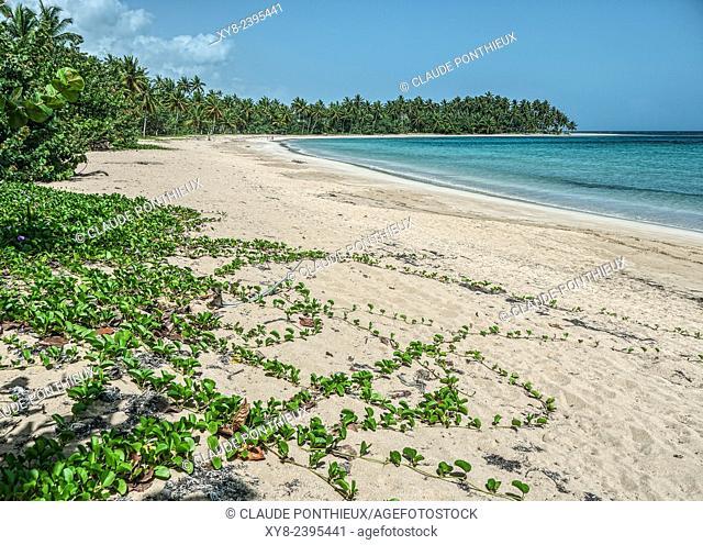 Beach, Samana, Dominican Republic
