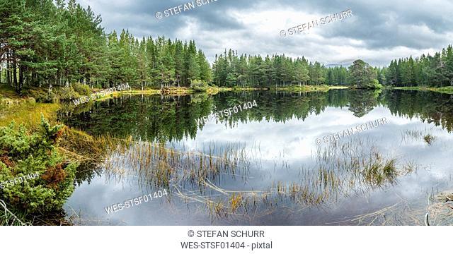 UK, Scotland, Highland, Cairngorms National Park, Glenmore Forest Park, Lochan nan Geadas