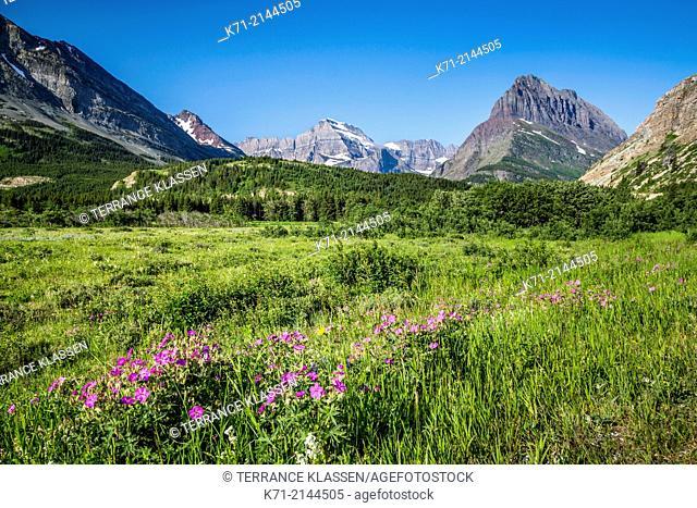 Alpine view near Swiftcurrent Lake, Glacier National Park, Montana, USA