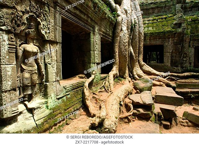 Ta Prohm Temple. Ta Prohm's state of ruin is a state of beauty, which is investigated with delight and left with regret